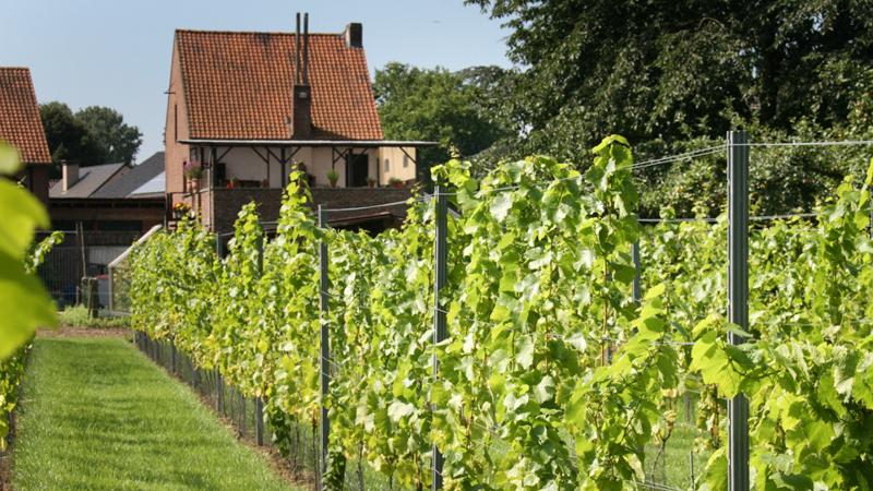 Wijn uit Leut 044